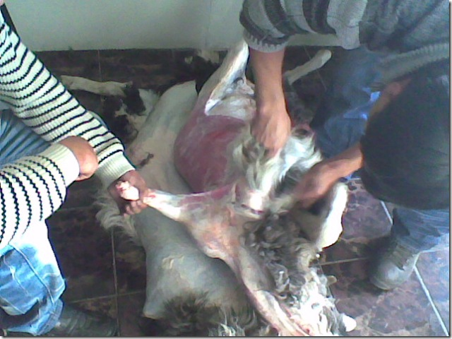 sheep slaughter 1